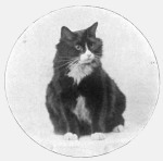 Mascot Phosphorus the cat, 1919